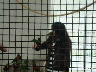 lorikeets