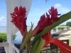 Beautiful Heliconias at Bahi Salinas, Cabo Rojo
