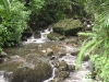 Vegetation and river at El Yunque