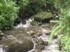 Vegetation and river at El Yunque