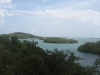 View of the mangrooves, Lajas PR 