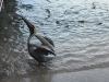 Seabird at la Guancha, Ponce PR