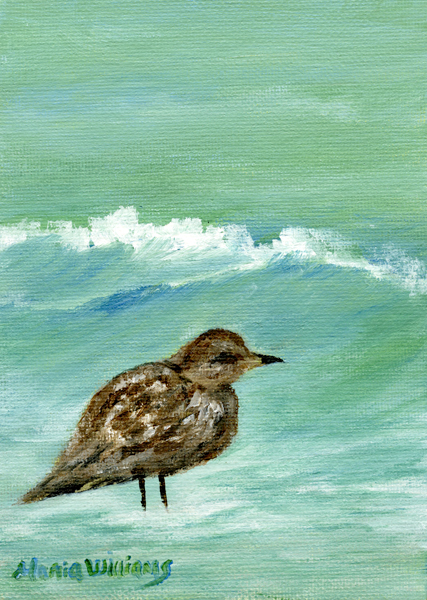 Bird by the Beach by Maria Williams