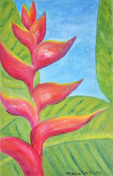 Heliconia Flower by Maria Williams