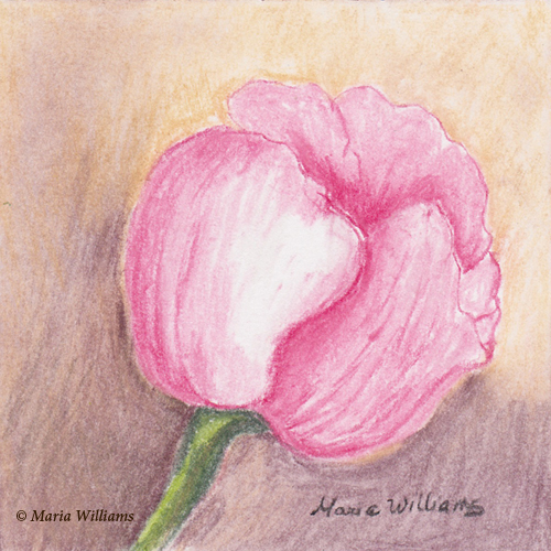 Spring Bloom  by Maria Williams