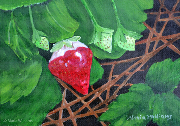 Strawberry Season by Maria Williams